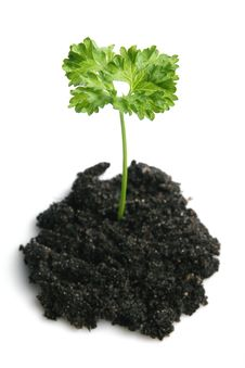Free Plant Stock Photography - 1995942