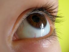Free Brown Guilty Eye Royalty Free Stock Images - 1996039