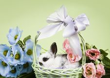 Free Easter Scene Stock Photos - 1998413