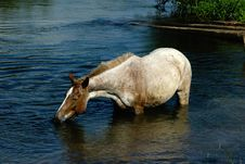 Free Horse On The River Stock Image - 1998741