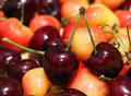 Free Red And White Cherries. Royalty Free Stock Images - 19902049