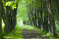 Free Basswood Alley Or Park Stock Photography - 19908642