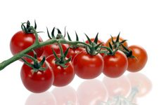 Free Juicy Red Tomatoes Royalty Free Stock Photo - 19900265