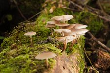 Free Mushrooms In Green Forest Royalty Free Stock Photography - 19900357
