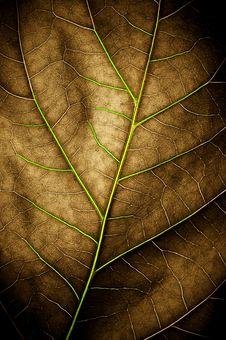 Free Leaf Stock Images - 19901024