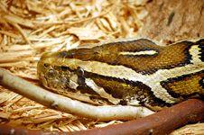 Free Snake Head Stock Image - 19902191