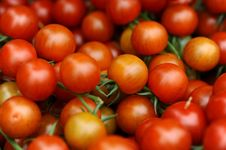 Free Juicy Red Tomatoes Royalty Free Stock Photography - 19902587