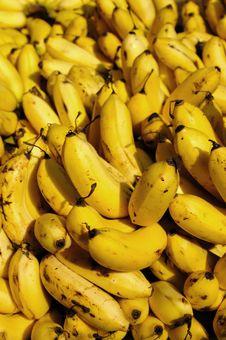 Free Bananas Royalty Free Stock Photos - 19902638