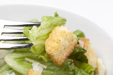Free A Fresh Green Salad Stock Images - 19902864