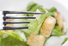 Free A Fresh Green Salad Stock Photo - 19902880