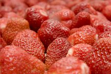 Free The Ripe Strawberries_1 Royalty Free Stock Photography - 19903657