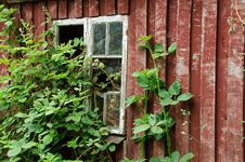 Free Old Window Royalty Free Stock Photo - 19903685