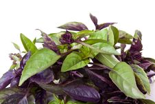 Free Mix Of Green And Purple Basil Stock Photos - 19904723