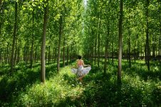 Free Dancing Between Poplars I Royalty Free Stock Images - 19906299