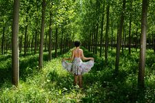Free Dancing Between Poplars I Stock Image - 19906341