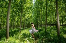 Free Dancing Between Poplars I Stock Images - 19906364