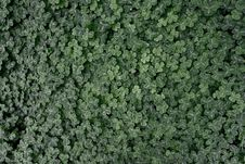 Free Clover Stock Image - 19906411