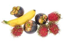 Free Assortment Of Tropical Fruits Stock Photography - 19906682