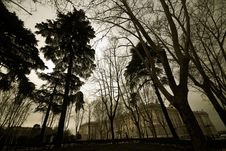 Free Urban Forest Royalty Free Stock Photography - 19906737
