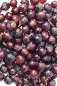Free Grape Stock Photos - 19906783