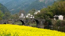 Free Ancient Bridge And Oilseed Reap Flowers Royalty Free Stock Photo - 19907015
