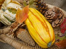 Free Basket Of Fall Fruits And Cones Royalty Free Stock Photo - 19907175
