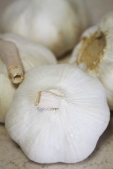 Free Garlic Stock Image - 19908491