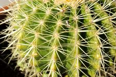 Free Cactus Close Up Stock Photography - 19908532