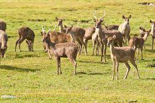 Free Deers In Farm Stock Image - 19908981
