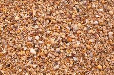 Free Shell On Beach Stock Photo - 19909110