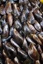 Free Stuffed Mussels Royalty Free Stock Photo - 19910855