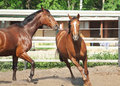 Free Couple Of Plaeing Horse Royalty Free Stock Photos - 19912298