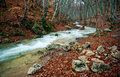 Free Woodland River Stream Royalty Free Stock Photos - 19913008