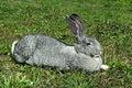 Free Big Mammal Rabbit Stock Photography - 19916372