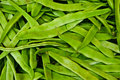 Free Green Runner Beans Royalty Free Stock Photography - 19916557