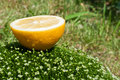 Free Fresh Lemon On A Green Grass Royalty Free Stock Photos - 19916608