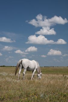 Horse In Field With Clouds Royalty Free Stock Photos