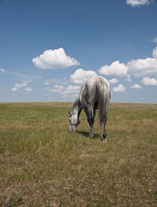 Free Back View Of Horse In Field With Clouds Stock Image - 19910851