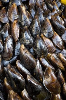 Free Stuffed Mussels Royalty Free Stock Photo - 19910855
