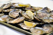Free Appetizer Oysters Stock Photo - 19912540