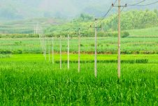 Free Pole  In  Field Royalty Free Stock Image - 19912826