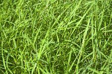 Free Green Grass Stock Image - 19912951
