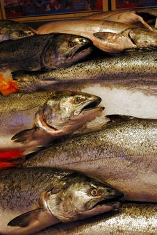 Free Salmon For Sale Royalty Free Stock Photography - 19913177
