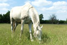 Free Horse Royalty Free Stock Photography - 19913187