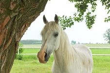 Free Horse Royalty Free Stock Photos - 19913208