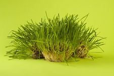 Free Green Wheat Royalty Free Stock Photo - 19913315