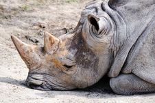 Free Rhinoceros Stock Images - 19913614