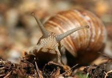 Free Snail Royalty Free Stock Photos - 19913908