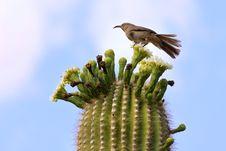 Free Single Bird On Cactus Stock Photography - 19914602