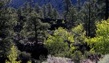 Free Landscape At Sunset Crater Volcano Stock Photo - 19914650